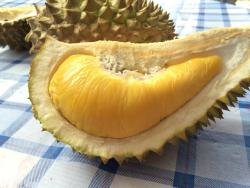 Jimmy's Durian Orchard