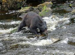 Tongass Rainforest Expedition