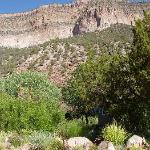 Desert Willow Bed and Breakfast
