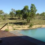 Zuma Zuma Safari Lodge & Spa照片