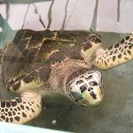 Foto de Old Hegg Turtle Sanctuary