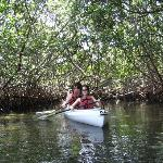  Enjoying the cover of a mangrove tunnel
