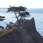 Lone Cypress - made famous in many photographs