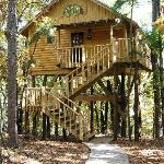  The Bungalow Treehouse