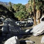 Agua Caliente Indian Canyons