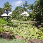  The pond in the hotel garden