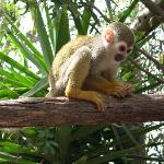 Tenerife Zoo Monkey Park