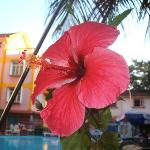POOL SIDE FLOWER