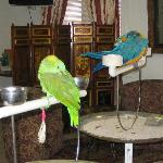 The cute birds that say hello and goodbye in the lobby. Watch out for the blue one.. its EVIL!
