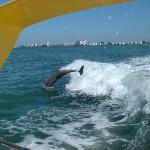 Awesome Local Dolphin Cruise