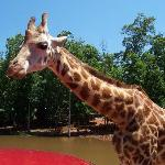 Pine Mountain Wild Animal Safari