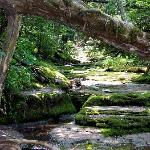 Creek (low on July 2) near Grist Mill on white trail off red loop between K and L markers.