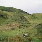 more of the Fairy Glen