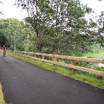 ‪Cape Cod Rail Trail‬