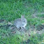 One of the many baby rabbits