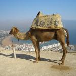  Camel on the Kasbar