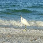 White Heron on Beach