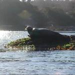 Seal about 150 yards from Mar Vista's beach (in the background) (2006)