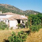 The farmhouse is surrounded by fragrant herbs, flowers, and olive trees