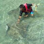 Petting sting rays on a secluded beach