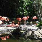 this is the sum of their flamingos