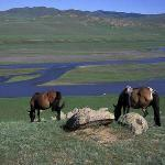 mongolian steppe and horse