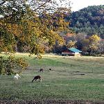 Sugar Creek Farm and Inn