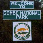 Gombe Stream National Park Foto