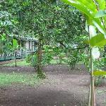 Foto di Tortuguero Jungle Lodge