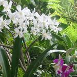 A nice closeup of some orchids