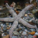 starfish at plymouth aquarium