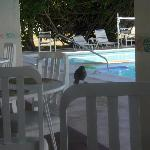  Dining with a friend poolside restaurant