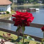  Roses at Lake Junaluska are Fantastic!!!