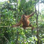 Orang Utan Sanctuary