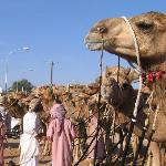 Camel race and pre-Eid Market