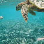  Hawksbill Turlte