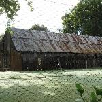 Dingup House Foto