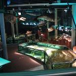 The aquarium area in Ecomare