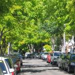 beautiful tree-lined street