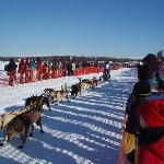 A musher and his dogs