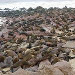 Cape Cross Lodge - seal colony