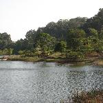 Lush jungle and wildlife - tiger reserve