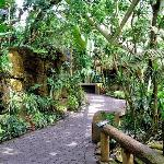 Inside Rainforest Pyramid, Moody Gardens