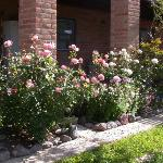 Roses at the Hilltop Hacienda