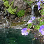 Flowers and Ponds