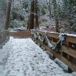  Lithia Park winter