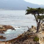  The Lone Cypress on 17mi drive