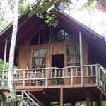 Tree Houses Hotel In Costa Rica