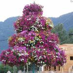  Flower Tree Downtown Sicamous
