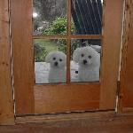  Bonz and Laci on the porch